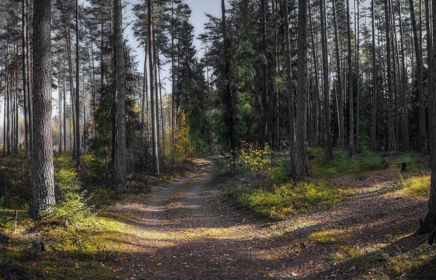 ***Утром в лесу.
