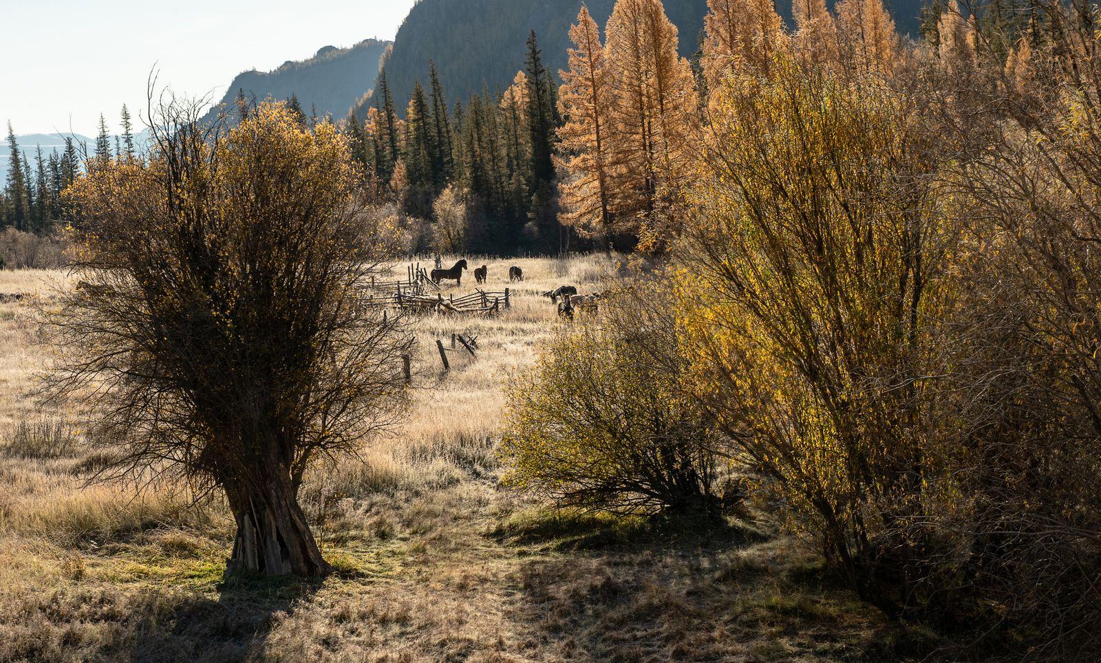 Гармония осеннего утра. Респблика Алтай лошади рассвет осень