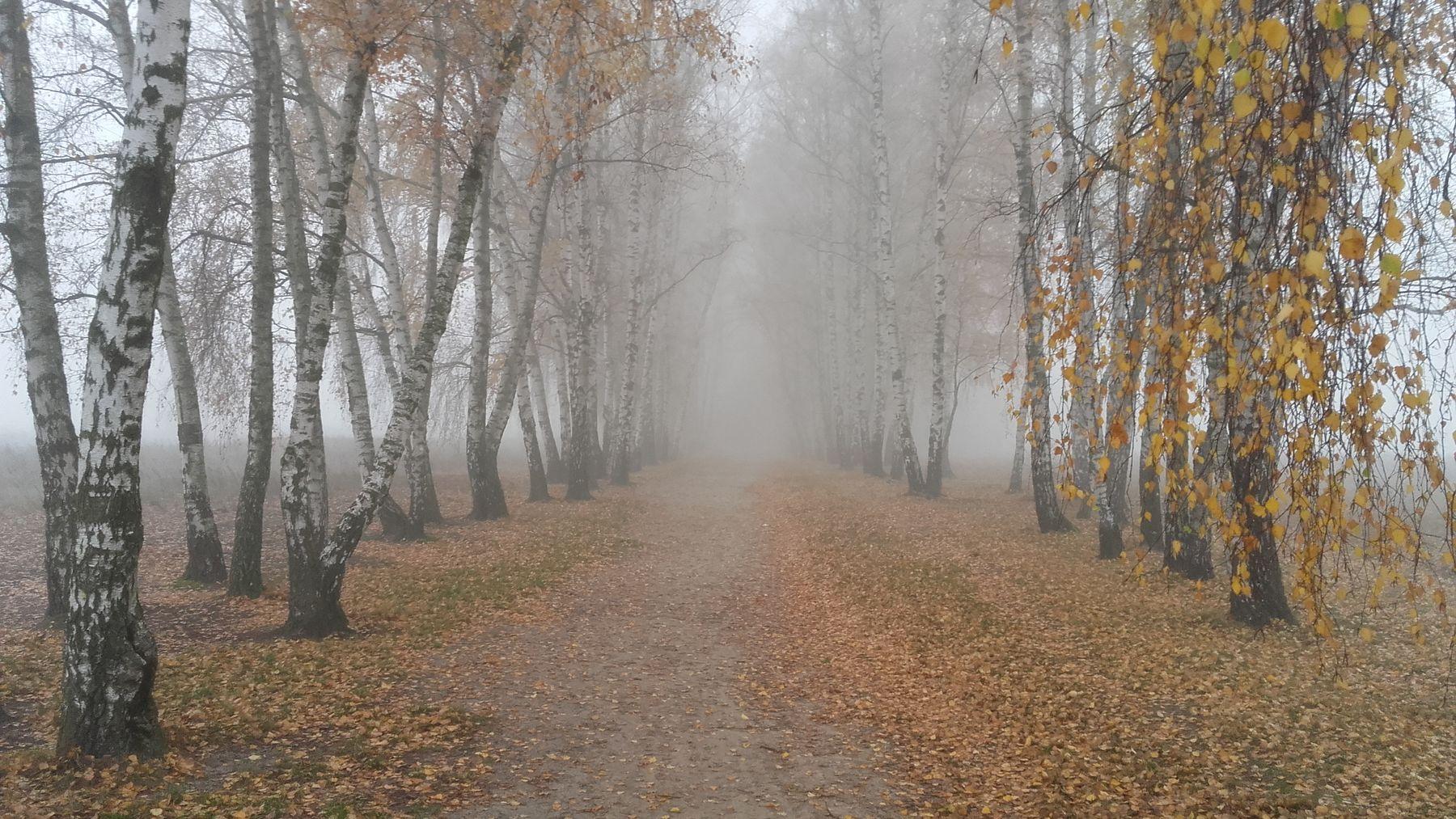 осенний туман осень туман деревья