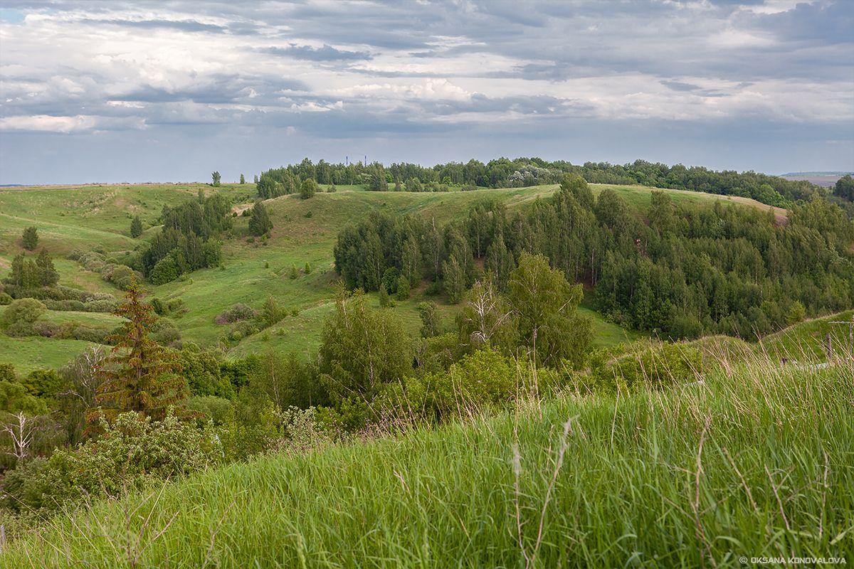 ***Пронские холмы. лето природа пейзаж холмы растения деревья небо