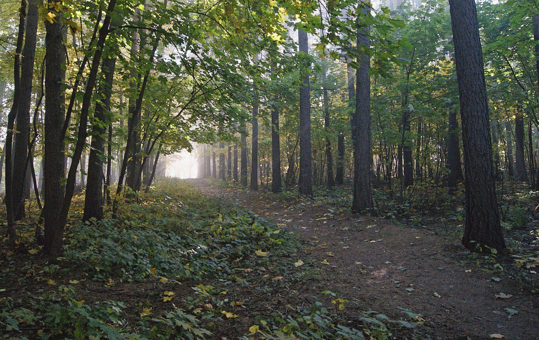 Тропой, ведущей к свету Свет утро лес туман