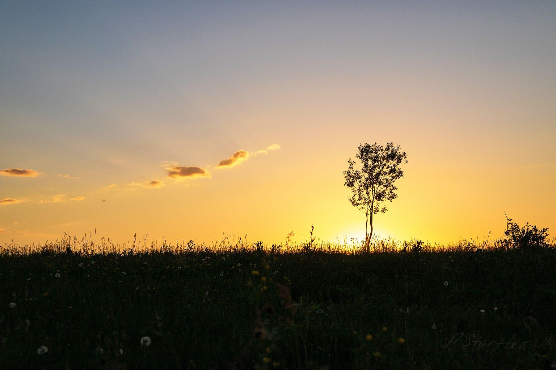 Дерево дерево лето пейзаж природа небо Пермский_край вечер закат силуэт минимализм
