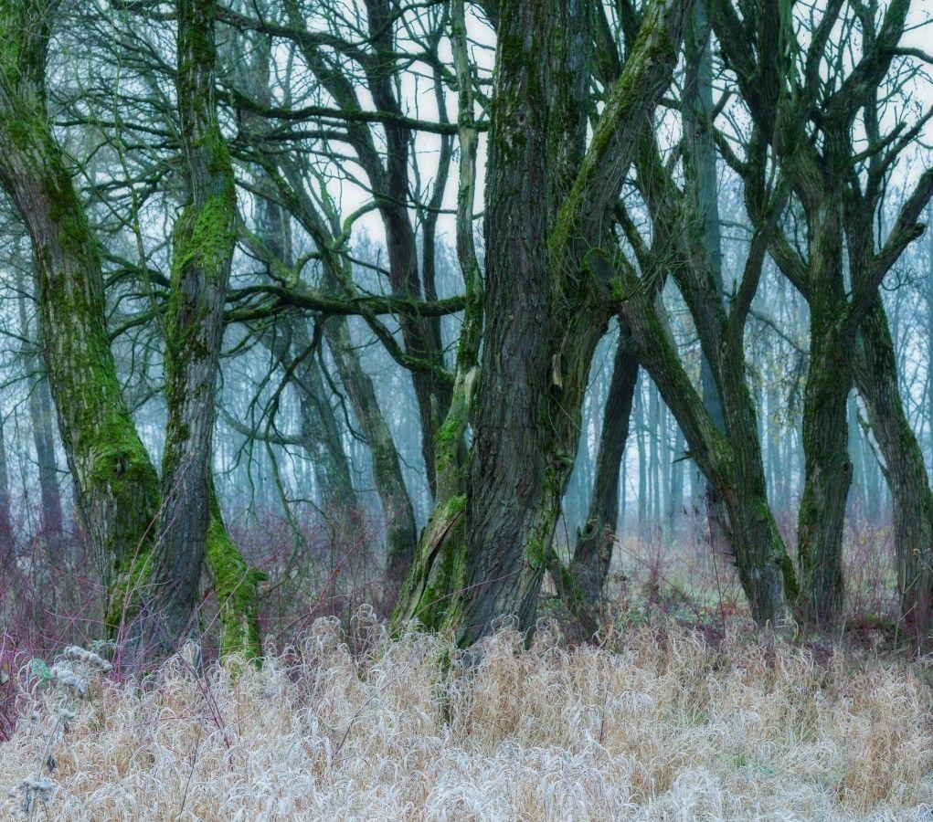 Рук переплетенье петербург осень невский лесопарк туман утро дерево
