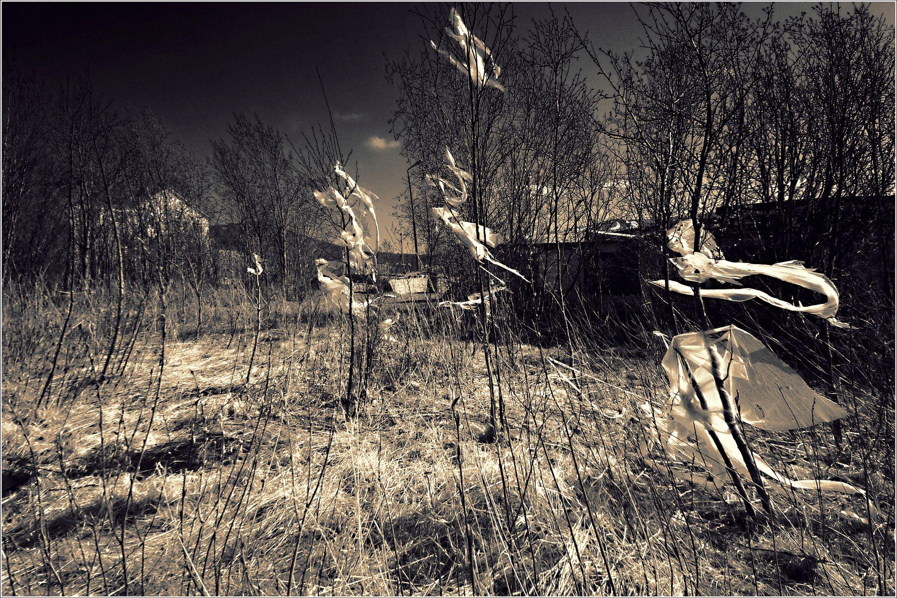 *Индикаторы майских воздушных потоков* фотография путешествие остальное Заполярье весна природа Фото.Сайт Светлана Мамакина Lihgra Adventure