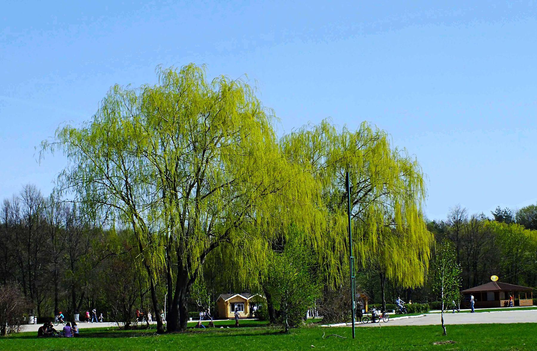 Весенний парк парк весна Тула