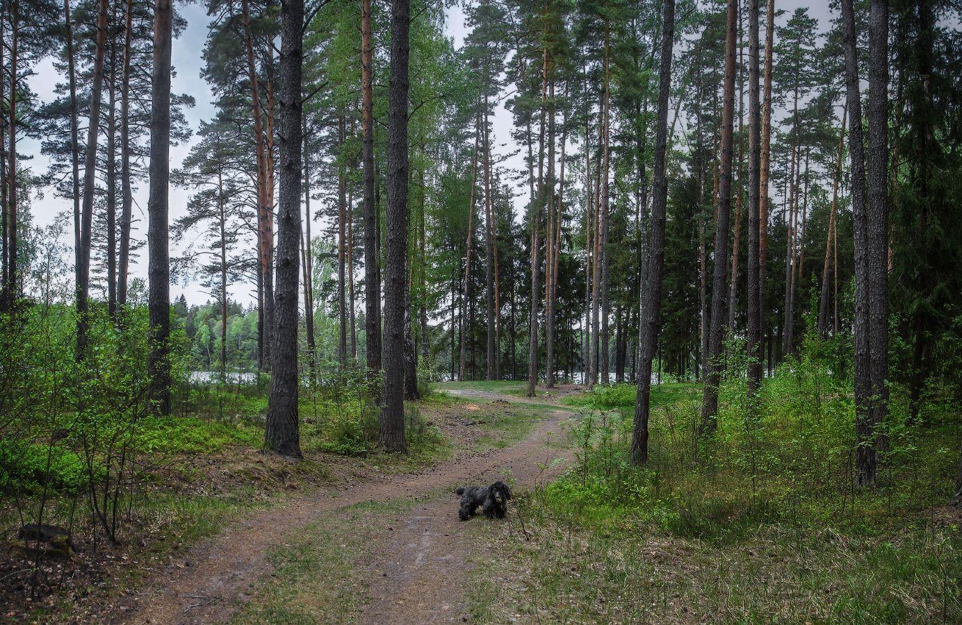 **Прогулки по весеннему лесу.