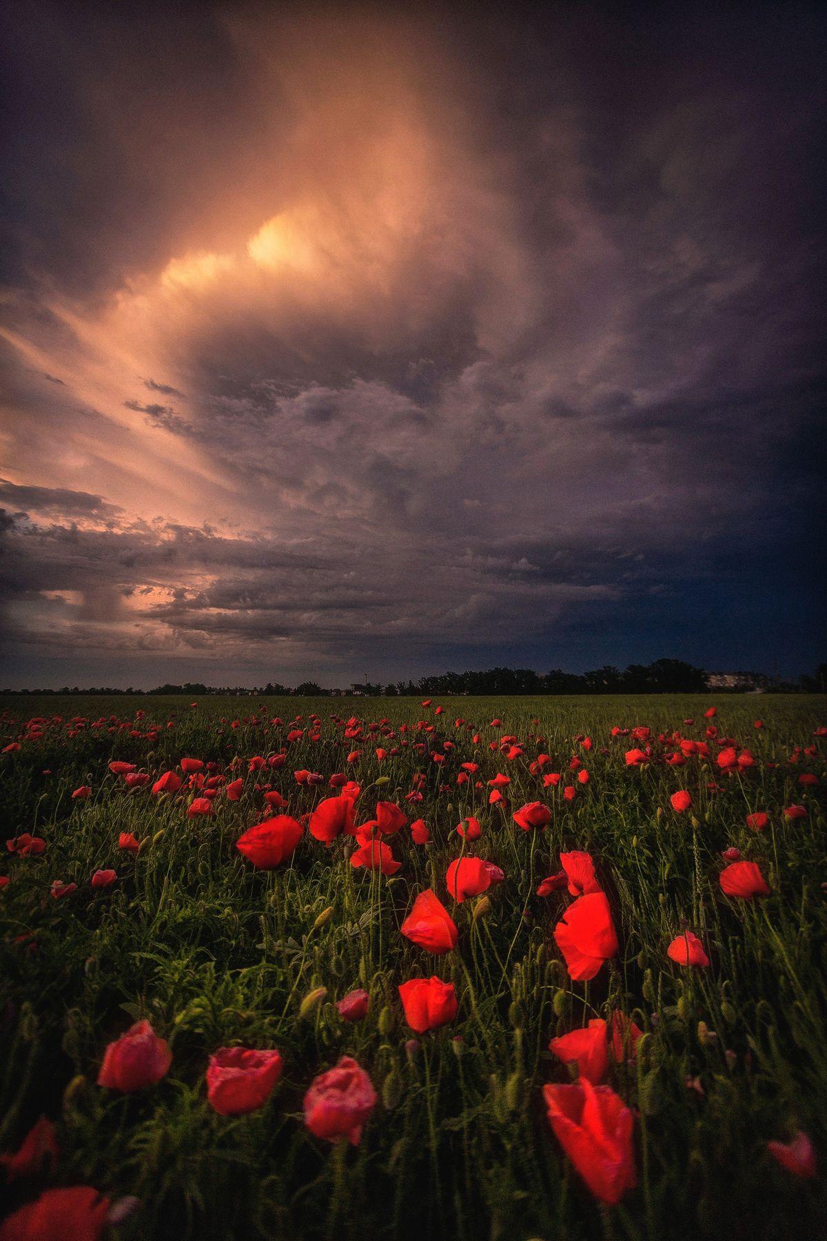 Тишина перед бурей Краснодар Кубань Россия природа город