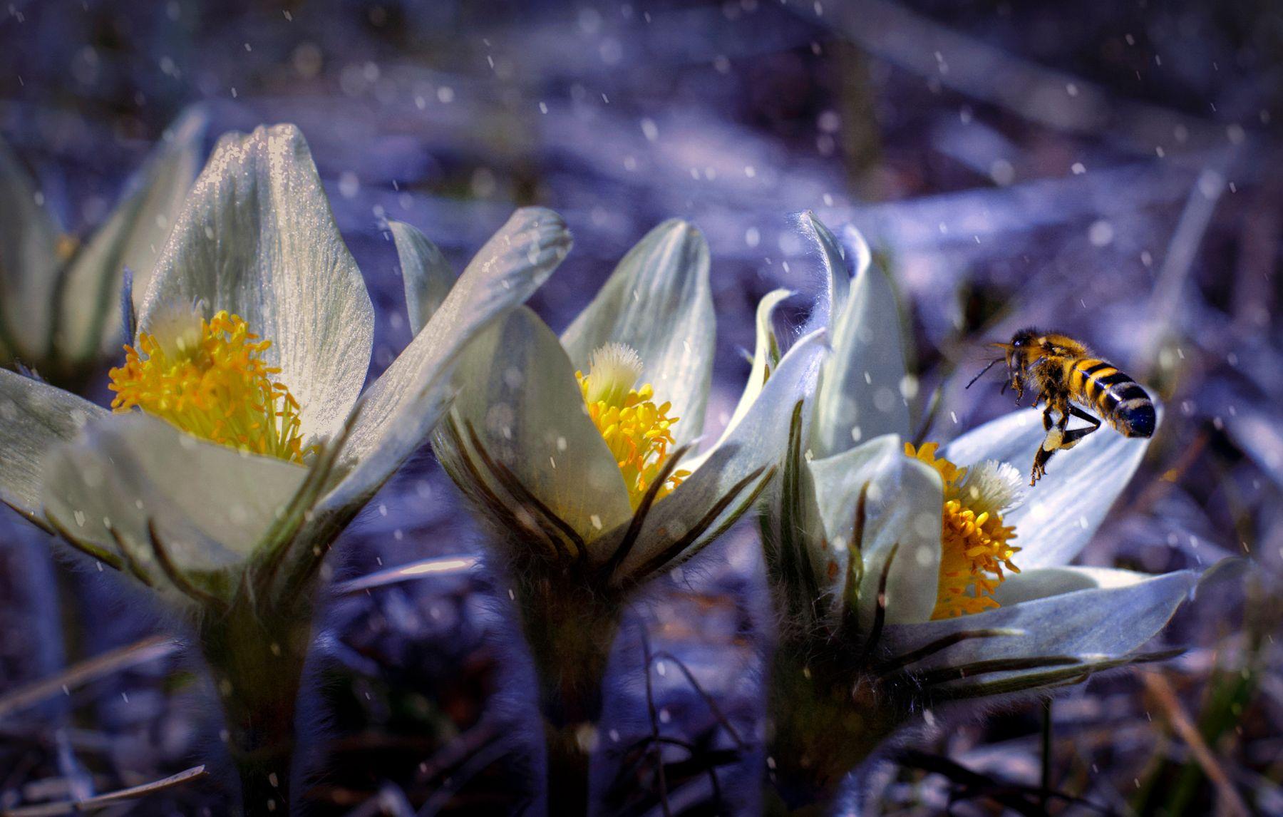 Весна не за горами ...
