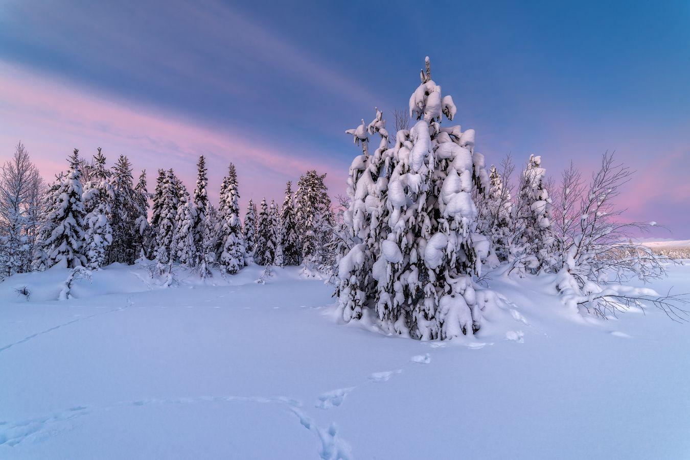 Зимний островок. север Кольский Заполярье Хибины Имандра