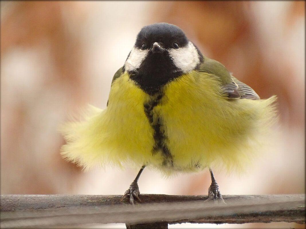 Девочка в платье из ситца. животные природа птицы фауна