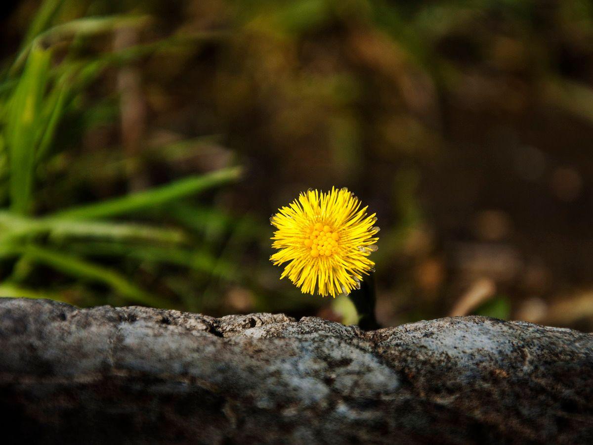 цветок и камень цветок камень окопчик