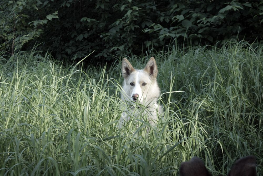 Летний портрет Лео собака пёс прогулка