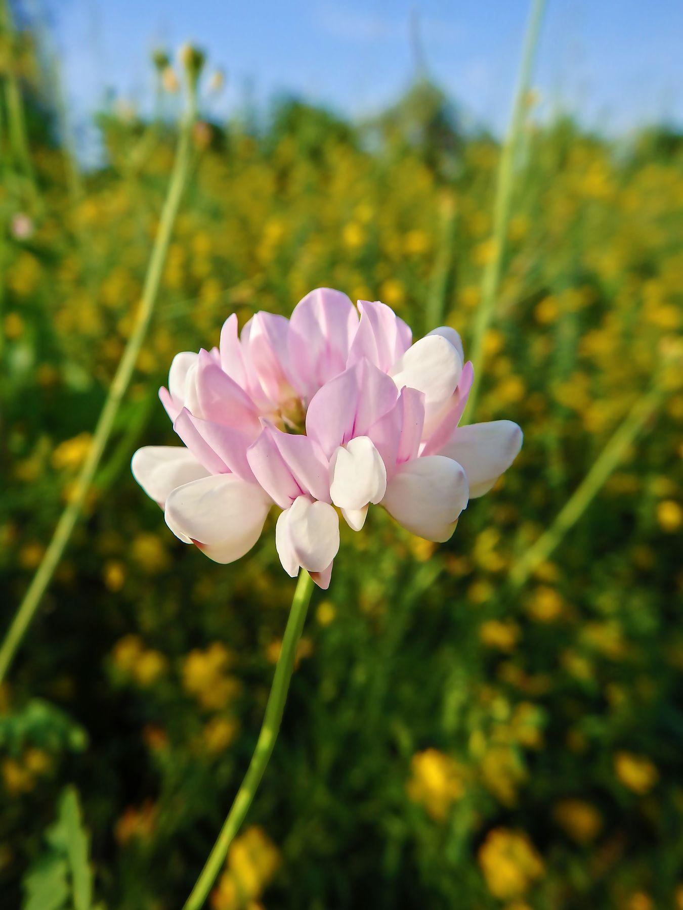 *** цветок природа растение
