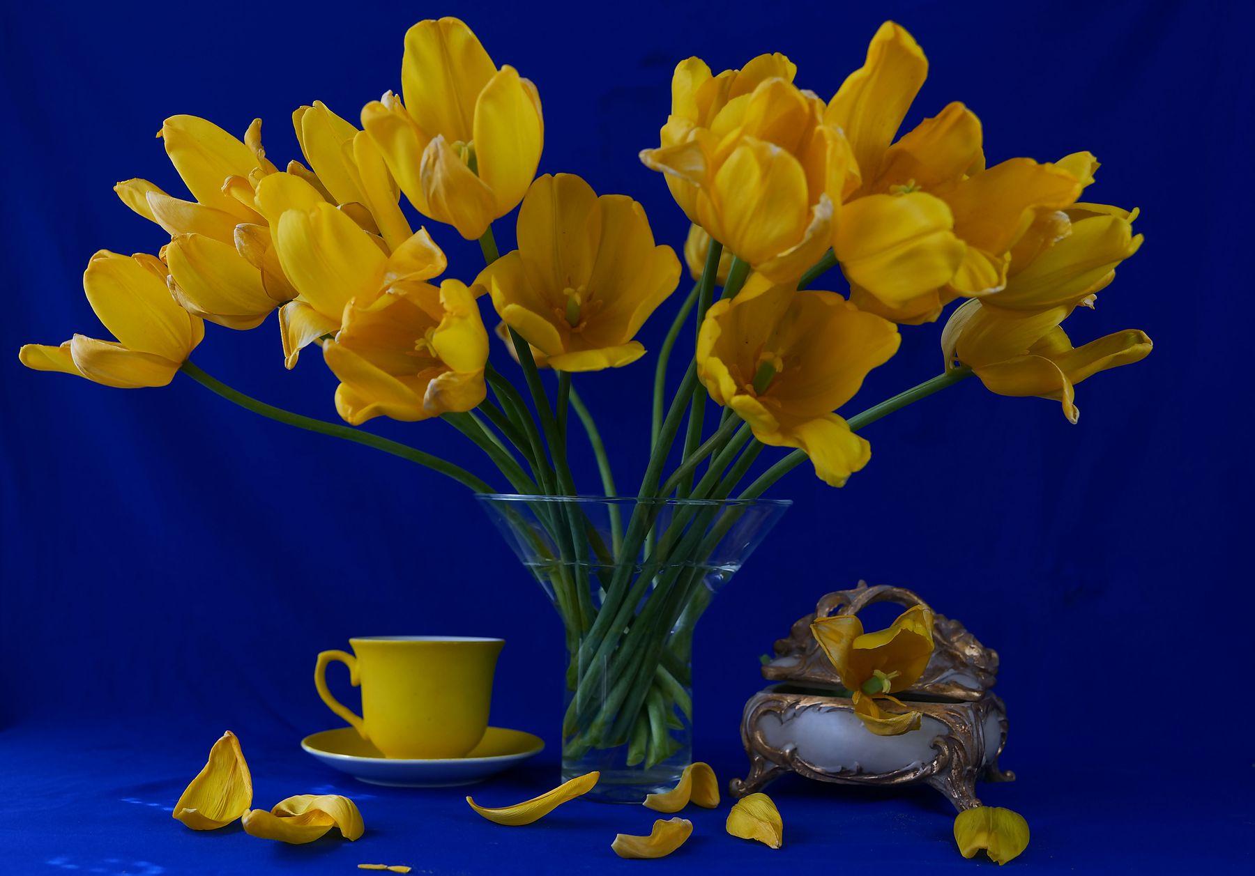 Фото-натюрморт тюльпаны желтые Фото-натюрморт тюльпаны желтые