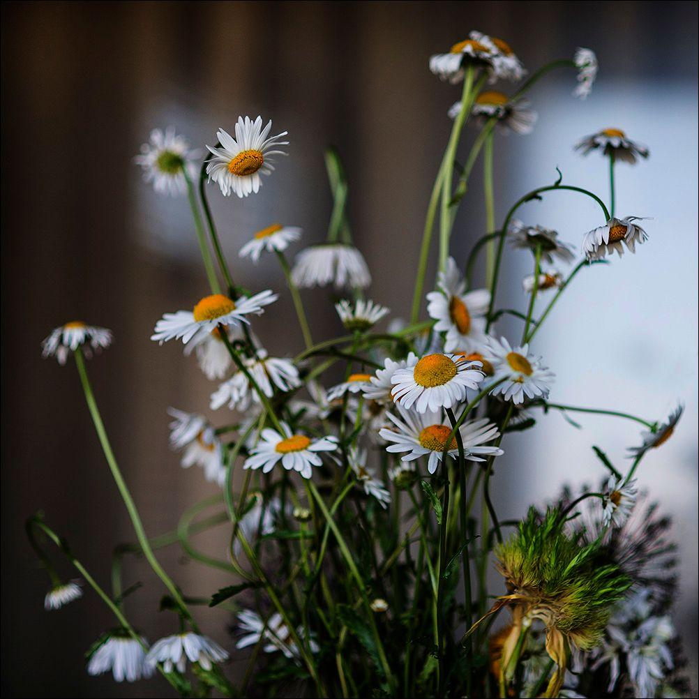 Летний букет лето цветы