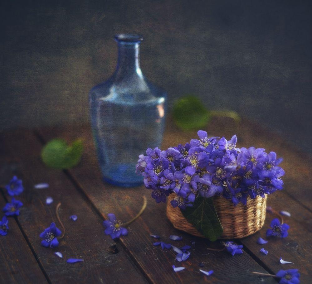 *** натюрморт первоцвет весна печеночница цветы
