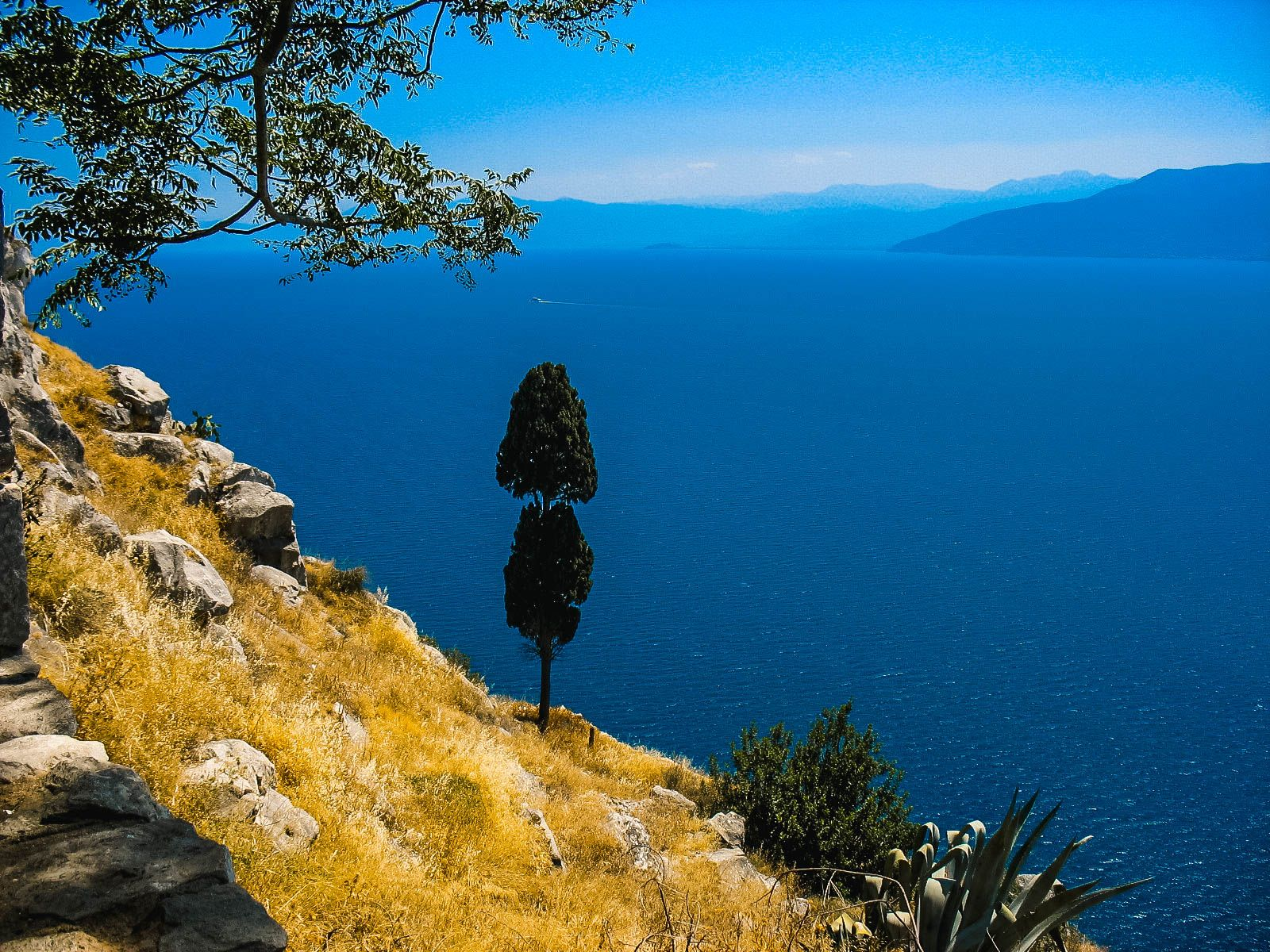 Одинокое дерево на берегу Эгейского моря , Греция (17.07.2008)