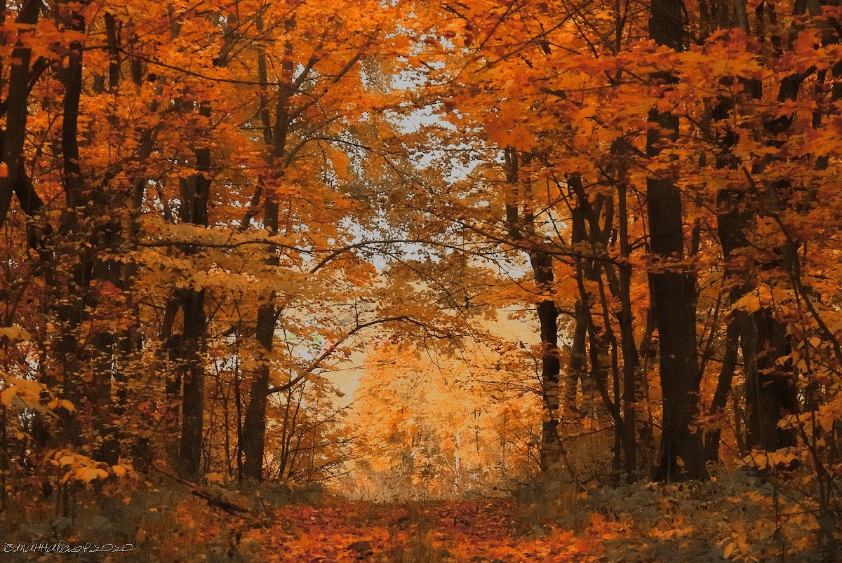 Осенний лес пейзаж природа осень лес