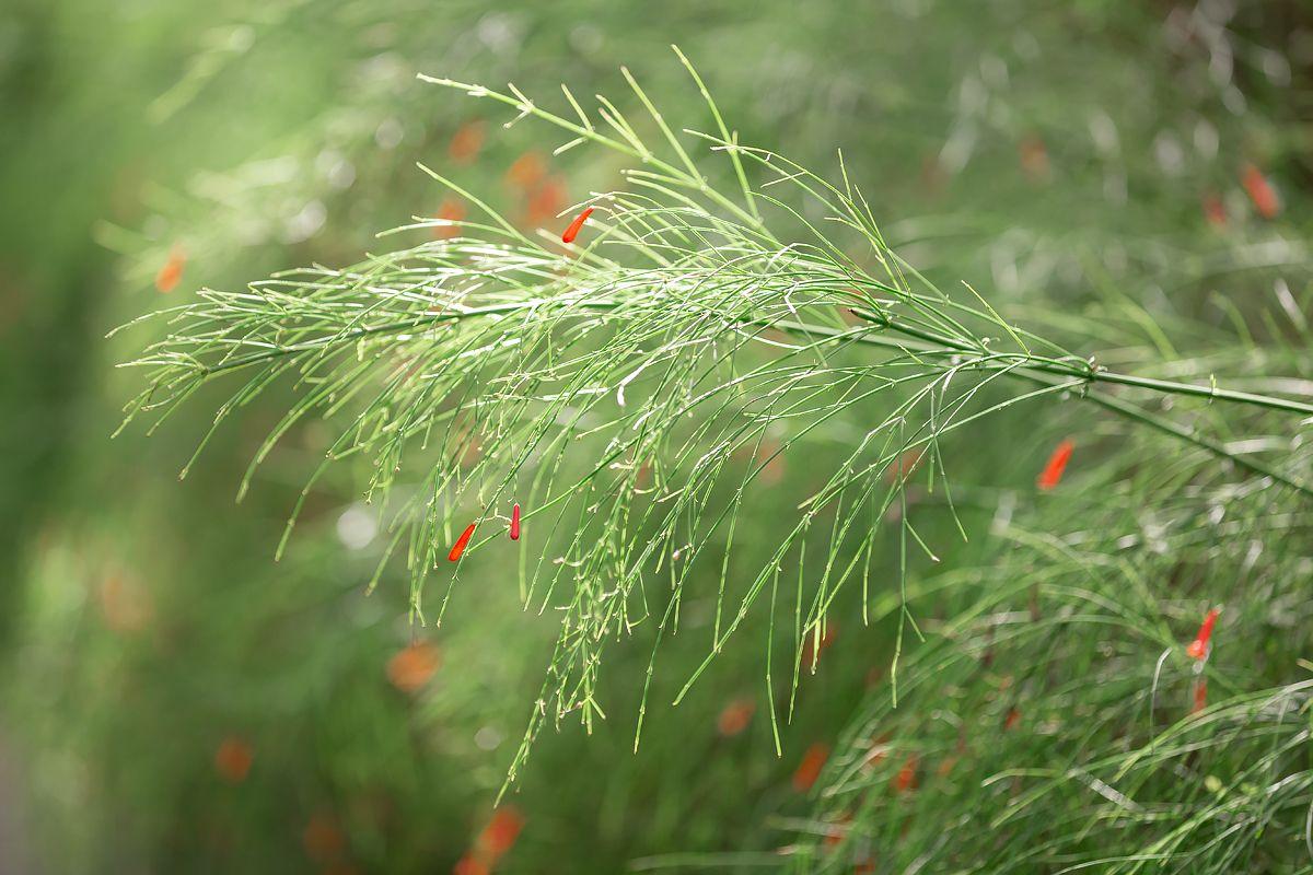 *** лето красный цветок растение флора цветение красота мир вокруг нежность зеленый зелень ландшафт сад