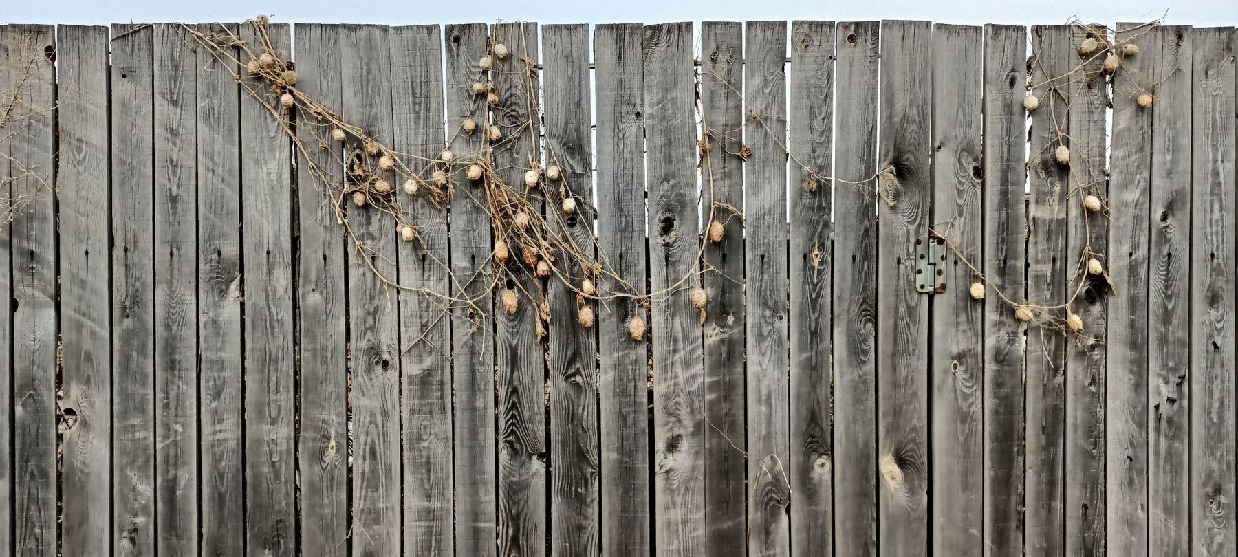 ***Ожерелье Забор деревянный забор калитка закрытая сухие растения бусы ожерелье украшение бешеный огурец эхиноцистис колючие шишечки колючеплодник плетущееся растение оплетение лиана колючки колючий