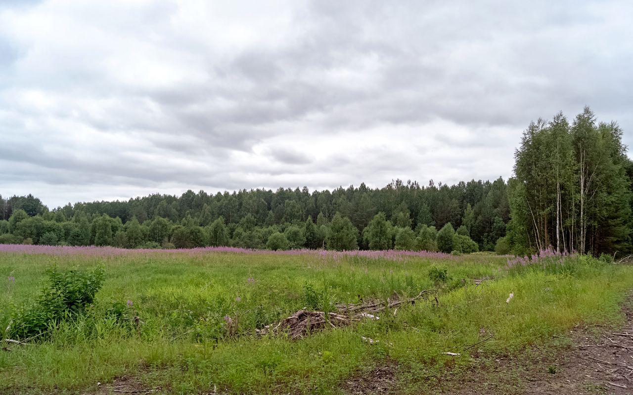 Урочище Филисово филисово урочище природа пейзаж нея коткишево лес поле