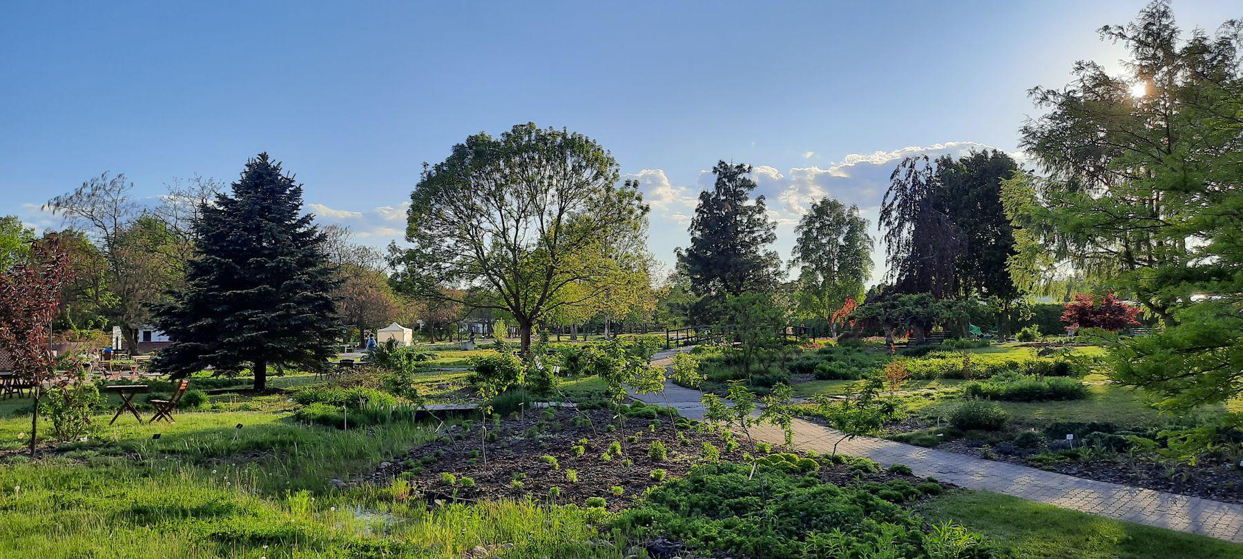 в ботаническом саду ботанический сад природа деревья