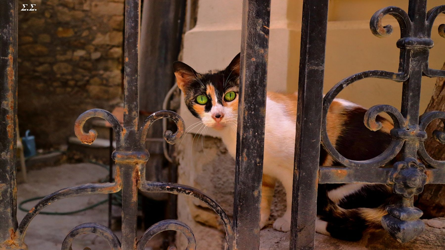 CAT BEHIND THE BARS