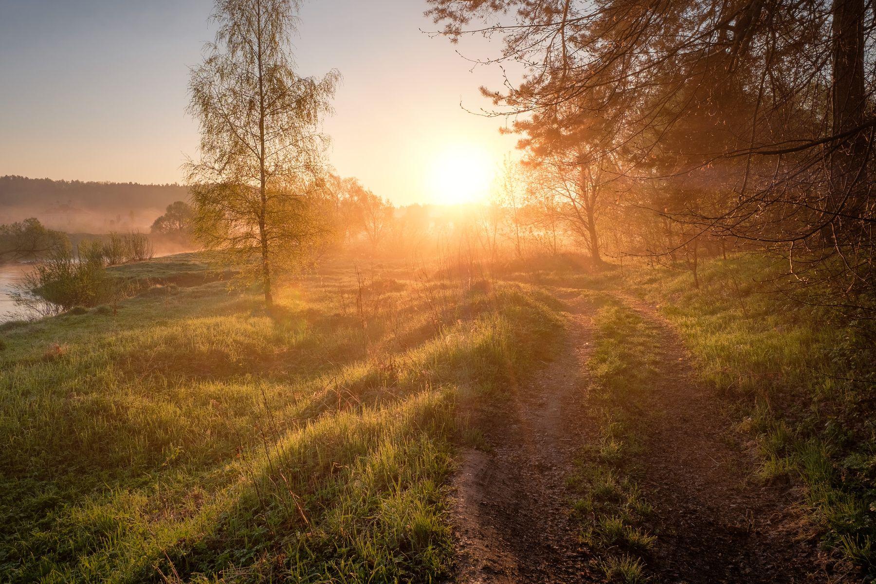 Солнце навстречу истра утро солнце деревья зелень роса рассвет река пейзаж