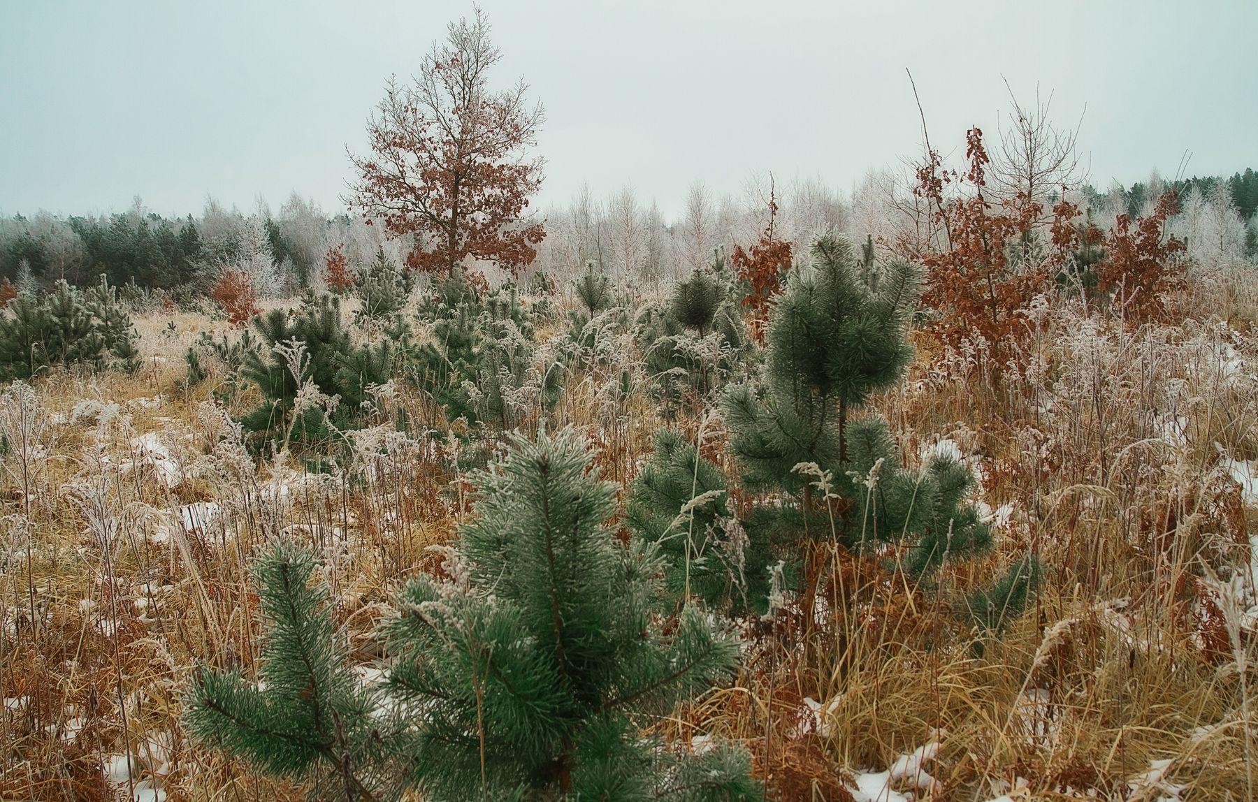 Зимнее настроение Природа пейзаж зима