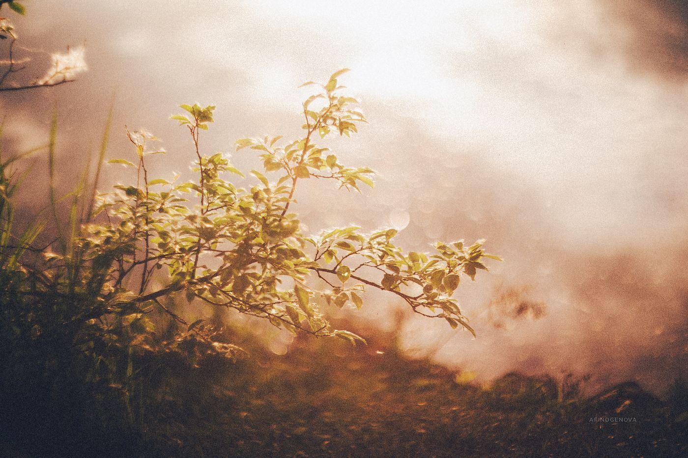 ### свет боке ветки весна листья