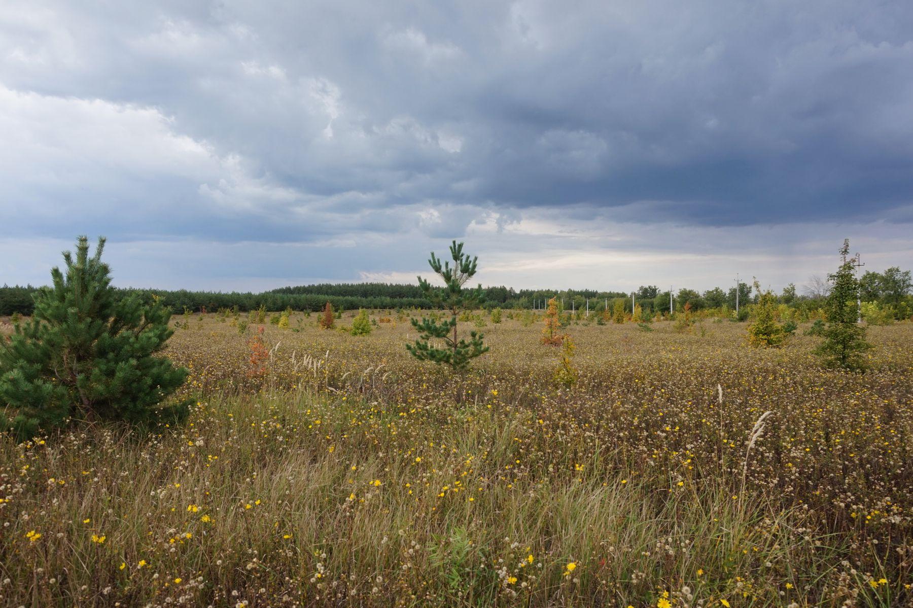 Отцветают цветочки, желтеют листочки... Осень вступает в свои права. Пейзаж осень
