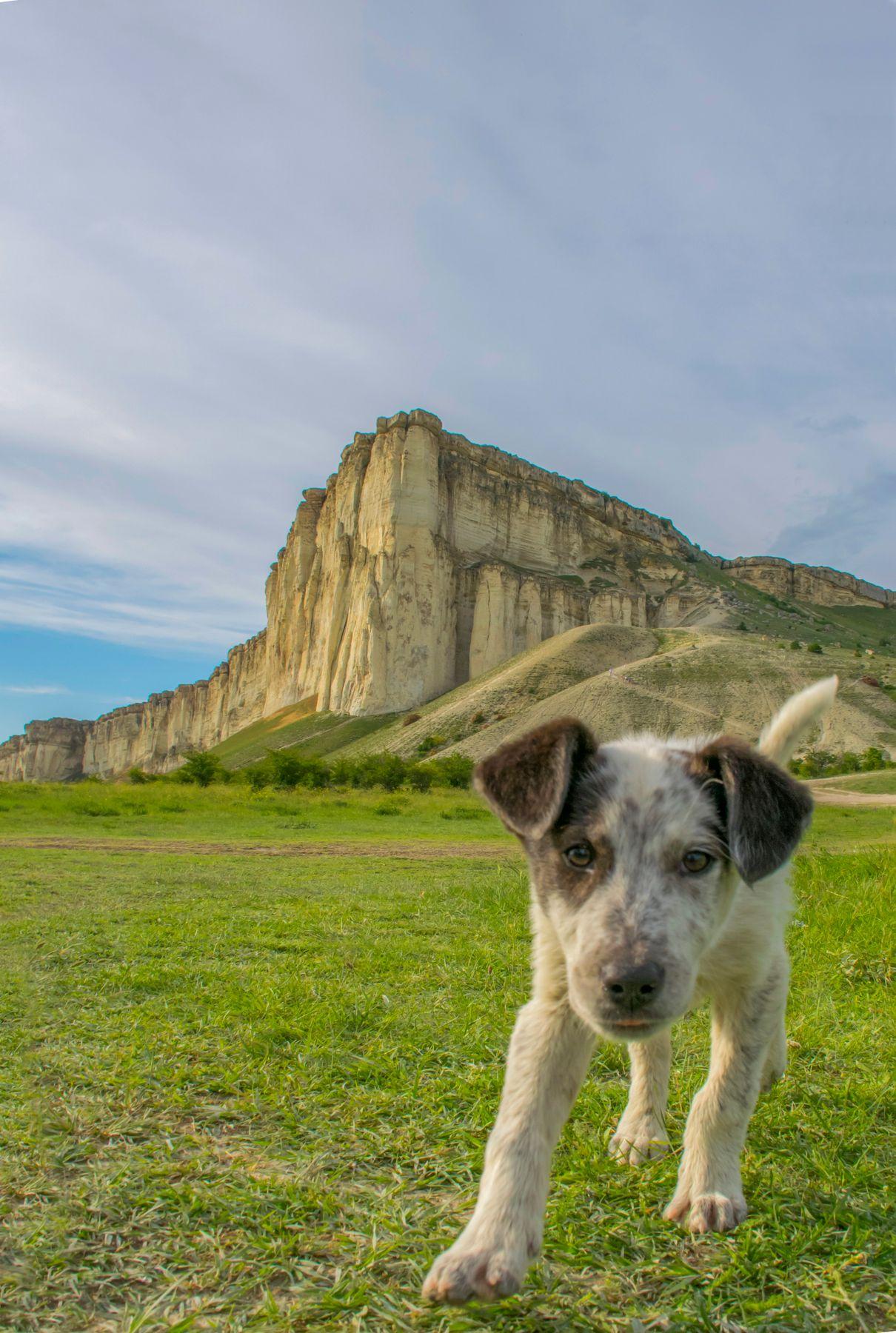 Любопытный пёс Ак-Кая собакен Крым путешествия Белая скала любопытство