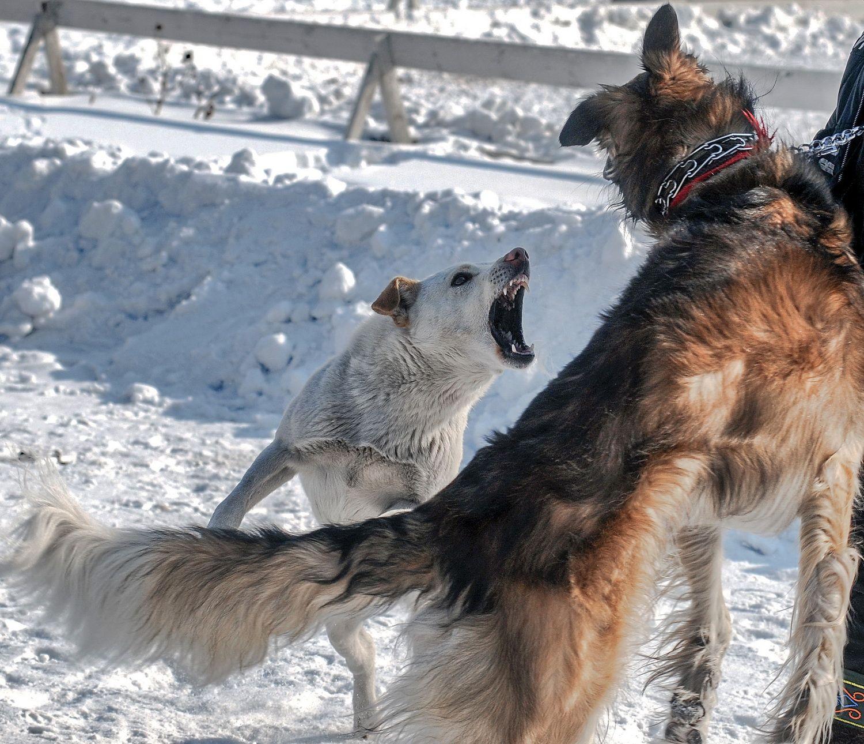 Здорово, братишка! Фото животных Собаки конфликт зима