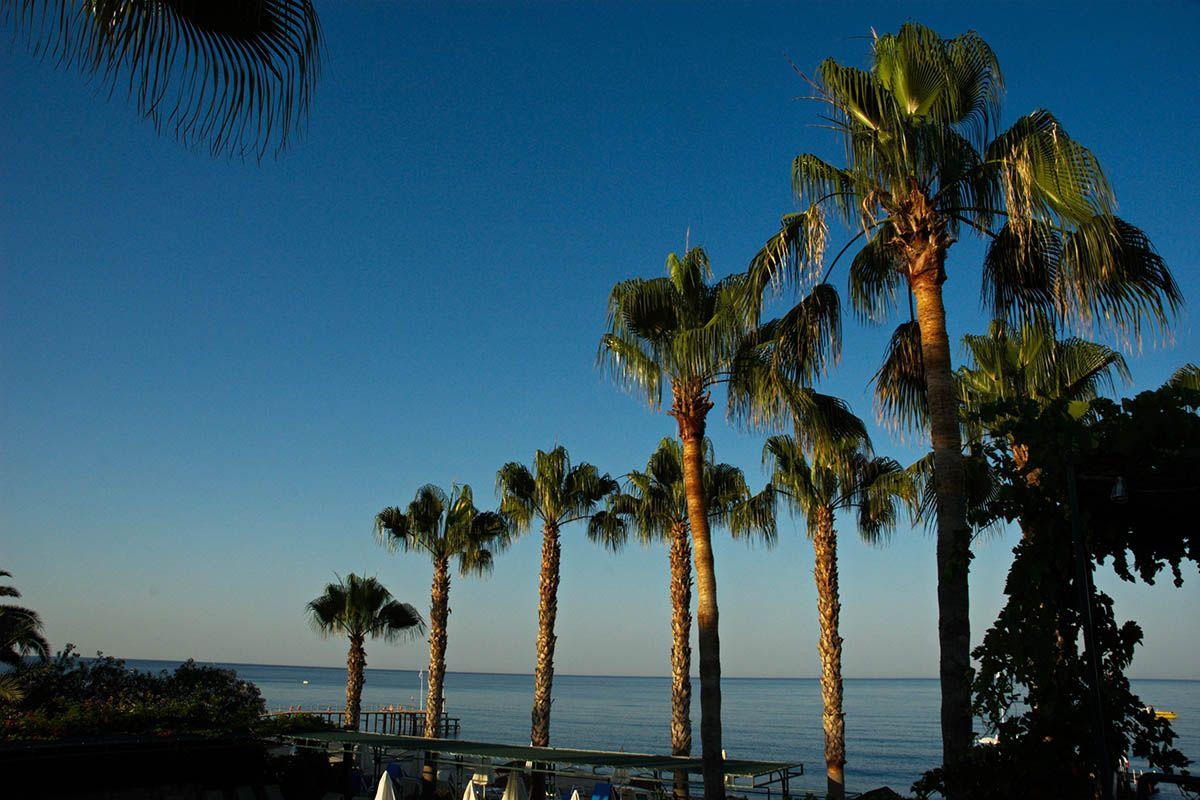 Берег моря. пальмы берег море