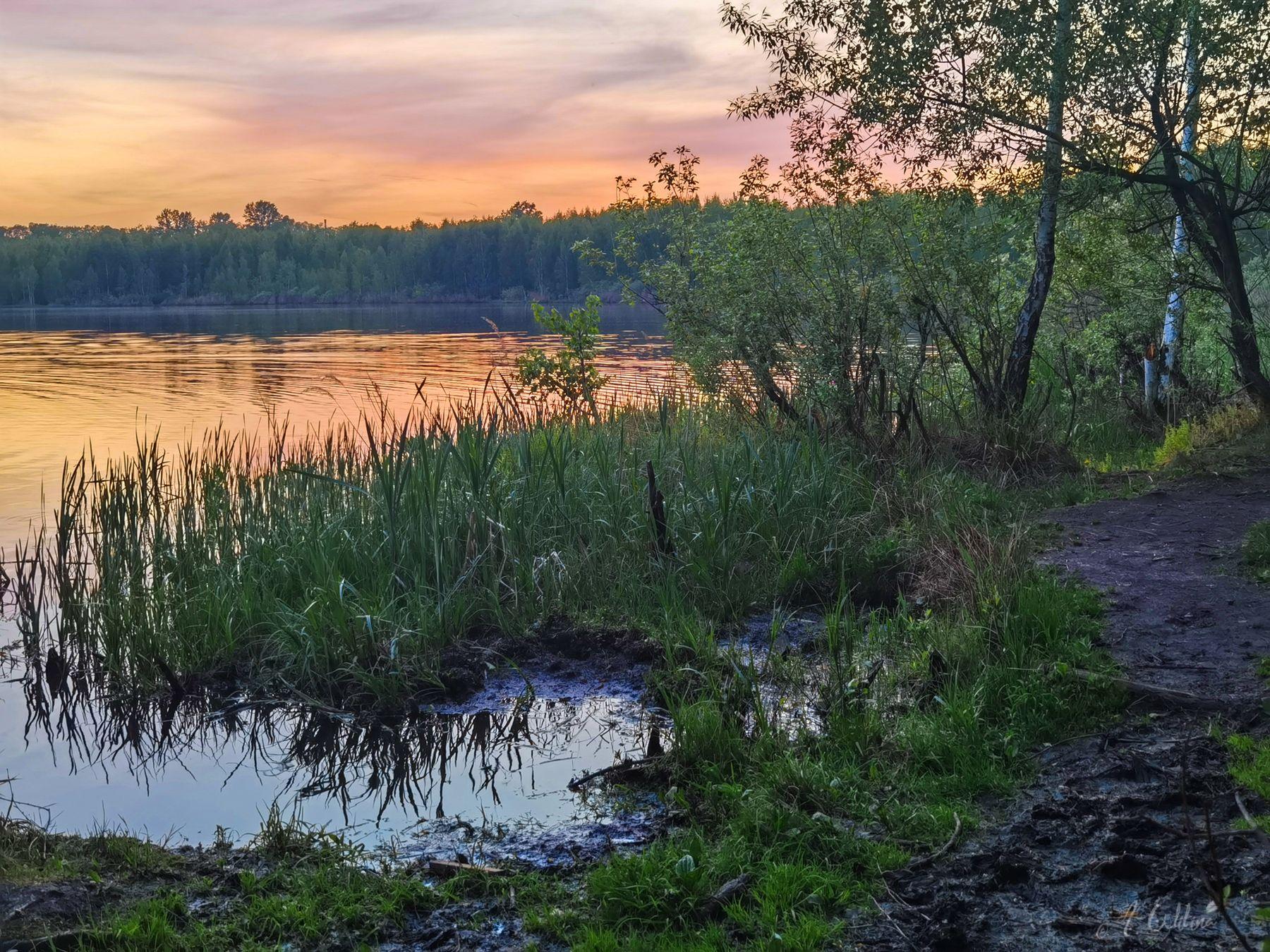 *** озеро вечер закат тучи облака берег трава березы лес тропинка