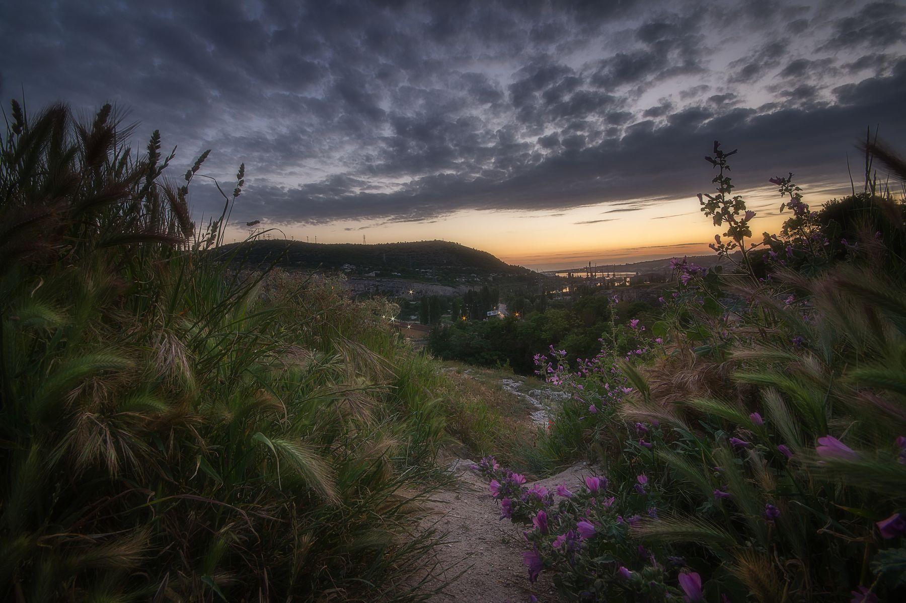 Вечерние травы цветы пейзаж природа закат