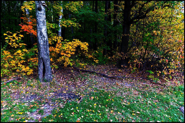 Была осень. Измайловский лес