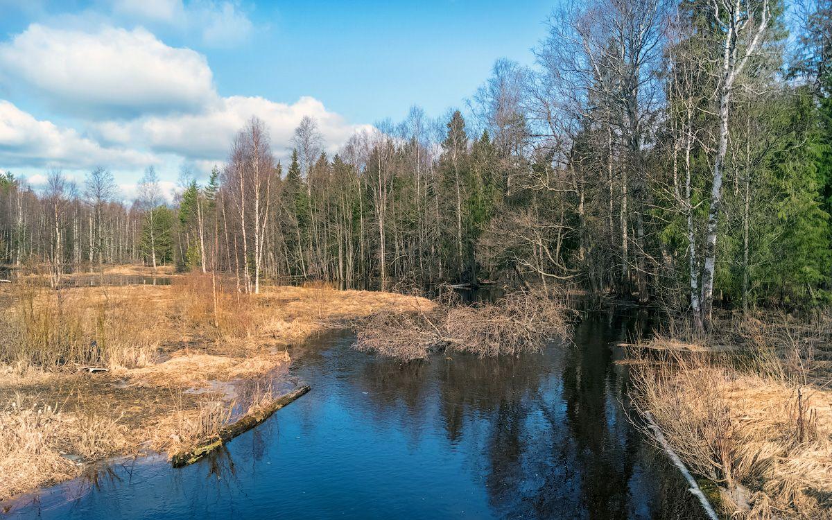 река Сендюга сендюга река природа пейзаж весна половодье вид вода