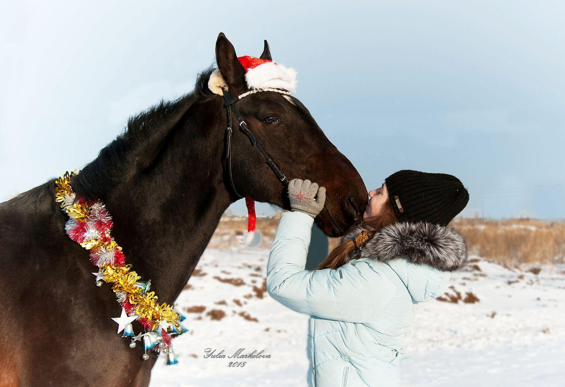 больше чем дружба! лошадка зима снег мороз