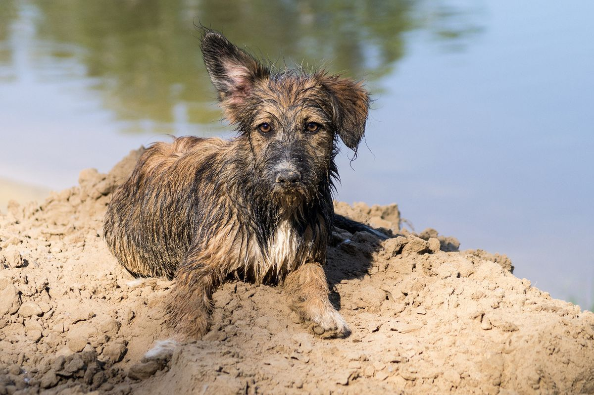 *** собака пляж