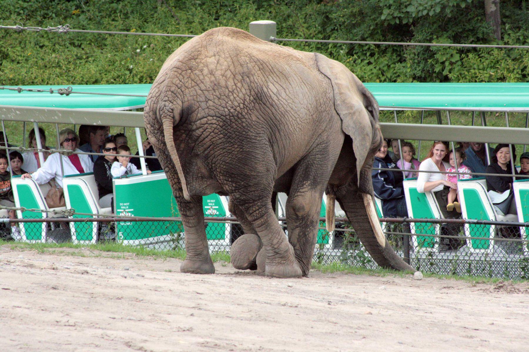 """""""-Слон мне сделал реверанс, а я ему поклон..."""""""