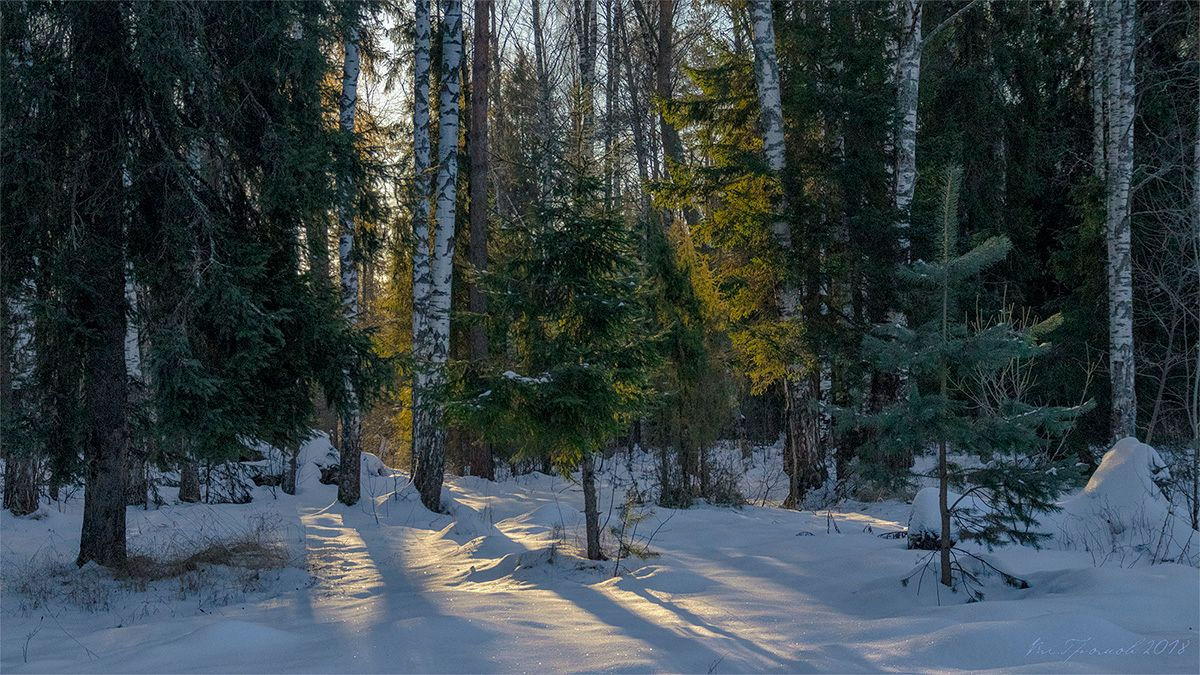 Утро в зимнем лесу пейзаж зима лес утро