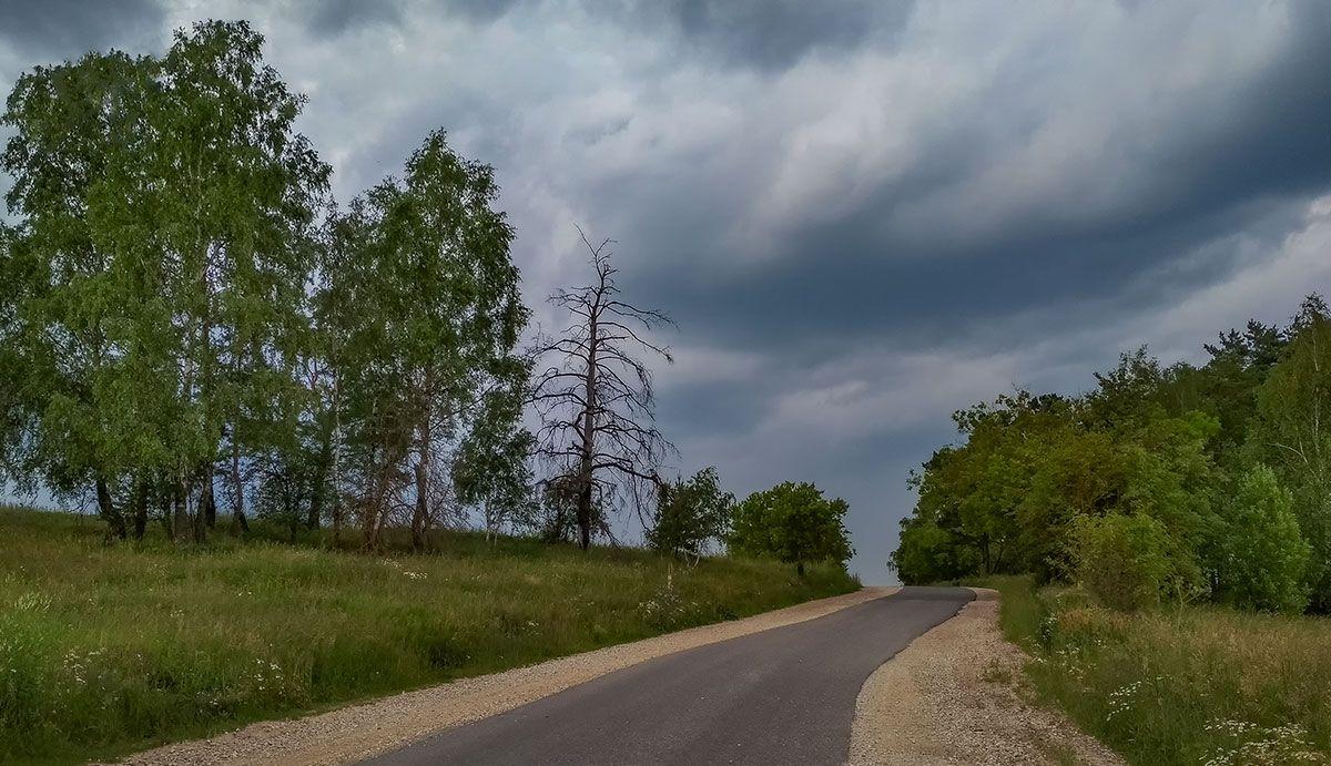 Перед грозой пейзаж природа лето небо тучи гроза облака дорога лес деревья путешествия
