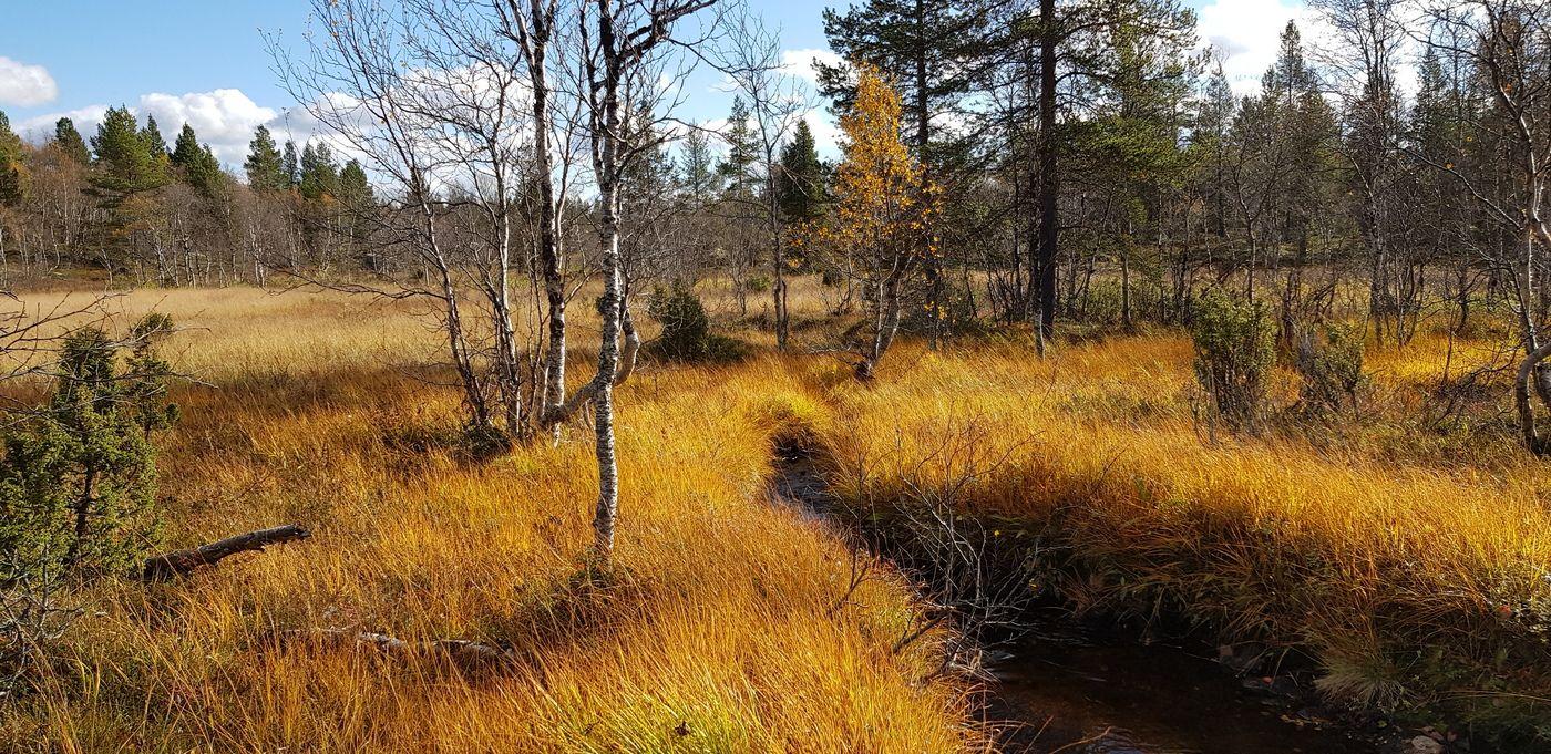 лисья шубка осени к лицу Лапландия Кольский полуостров Килпъявр осень сентябрь
