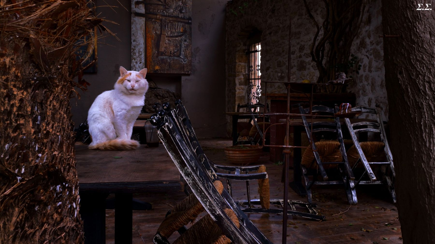 LONE CAT WITHIN THE ABANDONED RESTAURANT