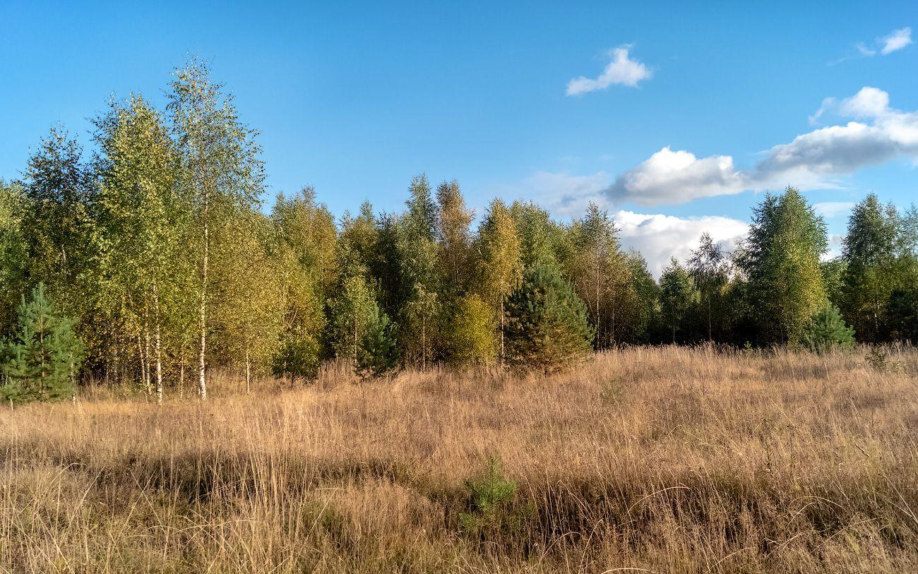 Первое дыхание осени нея коткишево алексеевское дементьево карьеры природа пейзаж вид осень