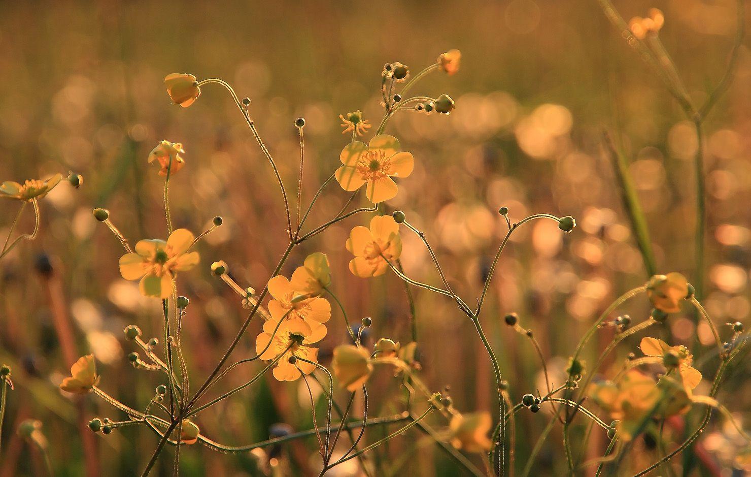 Попытка № 5 вечер цветы