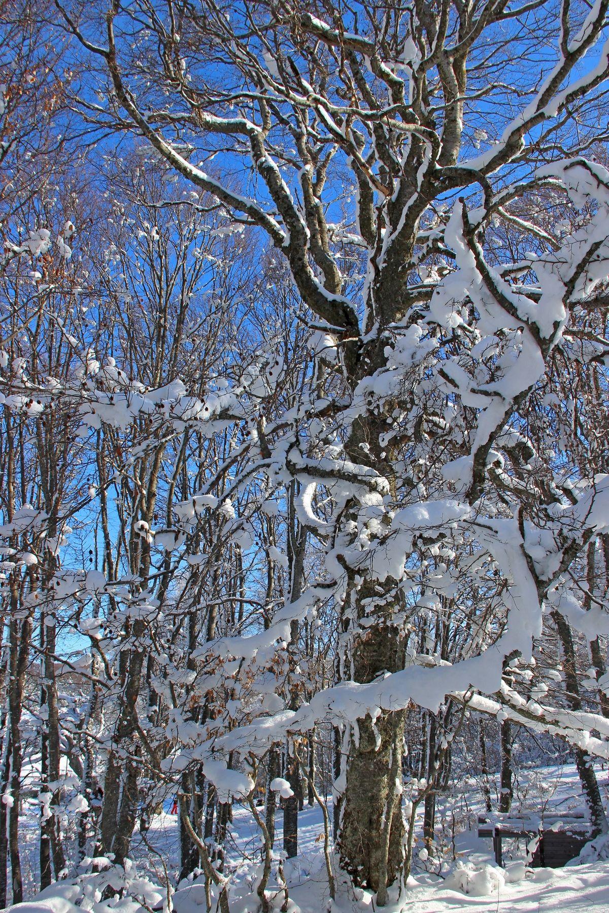 Серебряное убранство, или Вспоминая зиму... ай-петри крым зима снег