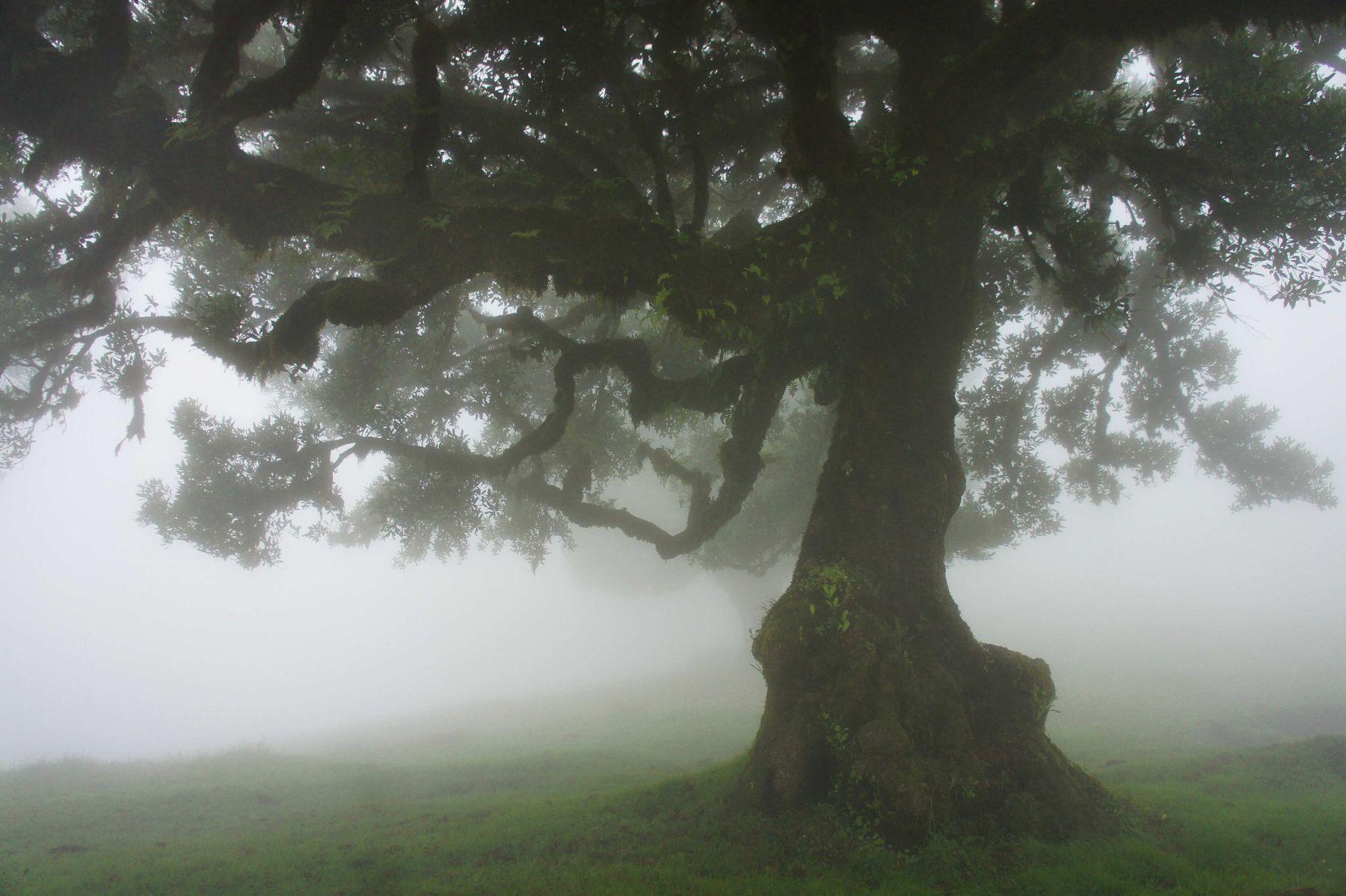туман туман дерево утро