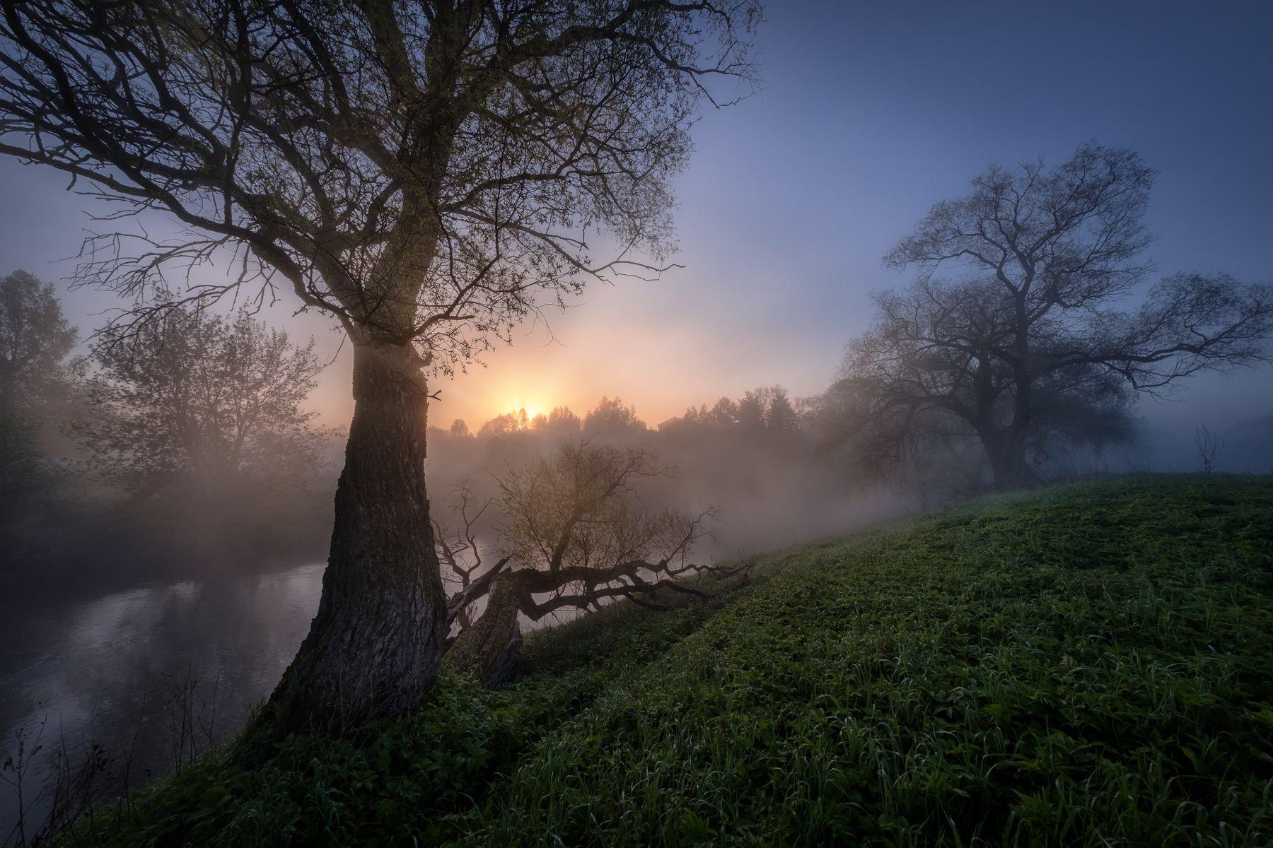 Наедине с великанами истра река пейзаж рассвет туман небо деревья утро тишина